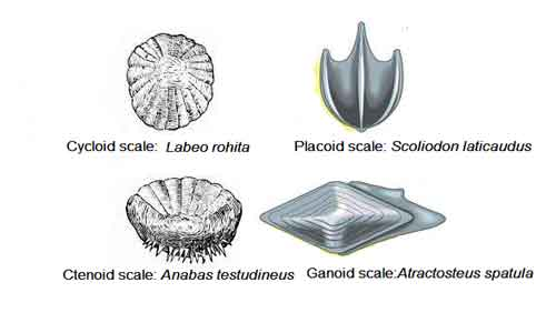 image of Different-types-of-scales