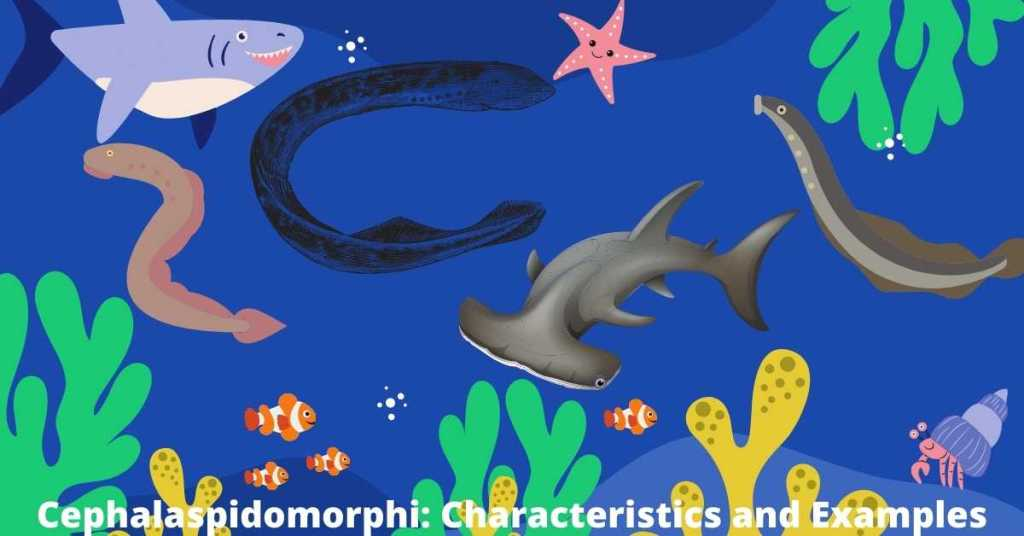 Image of Cephalaspidomorphi Characyeristics and Examples