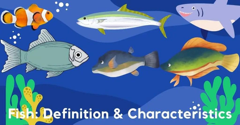 Fish Definition & Characteristics
