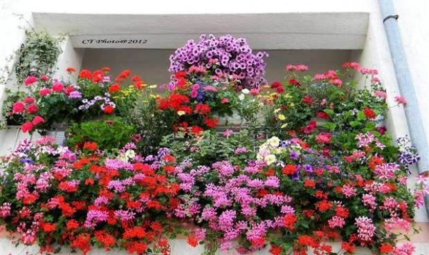 Mali trikovi za ljepše cvijeće… Saznajte kako da imate najljepše cvijeće u komšiluku!