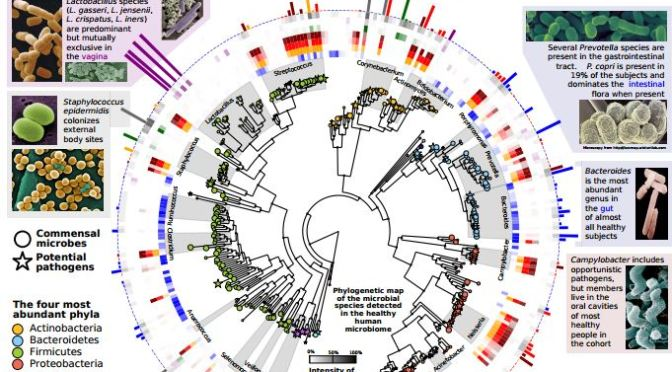 MapOfDiversityInTheHumanMicrobiome_HighResolnAttachmetGmailedAug18_2014Download_HarvardThe Huttenhower LabMetaPhlAn Metagenomic
