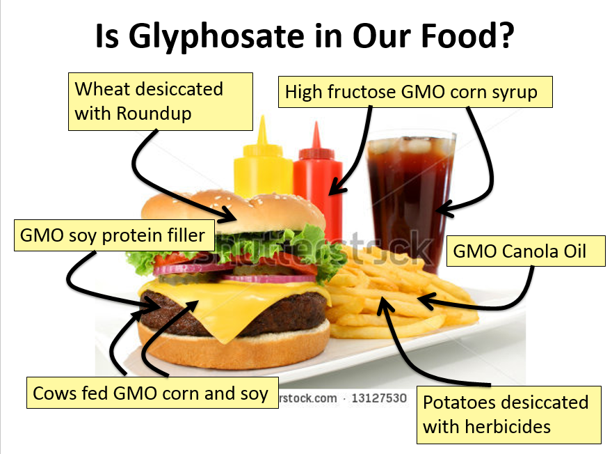 Roundup in our food glyphosate and disease: autism, diabetes, Alzheimer's, diabetes, gmo, intestinal gut...