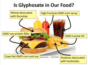 Glyphosate is ubiquitous in our food system
