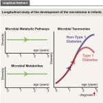 Gut diversity plummets before T1D diagnosis