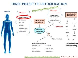 Detox_Three Phase Overview
