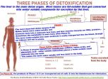 Detox_P450 enzyme is the most important detox enzyme