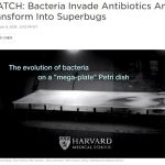 Picture of antibiotic-banded-mega-dish