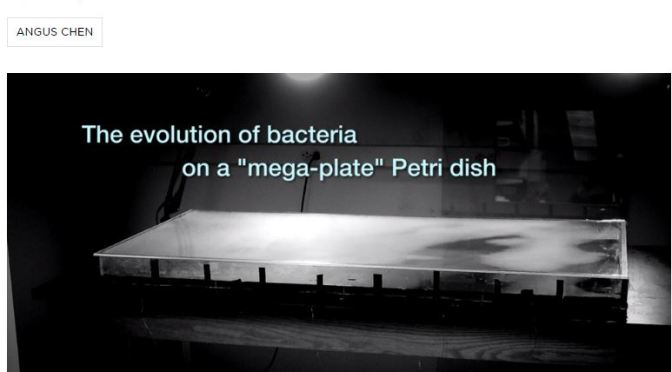 Watch Bacteria Become Antibiotic Resistant