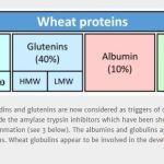 Picture of proteins in wheat