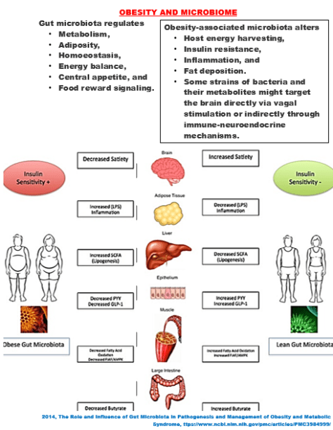2014, The Role and Influence of Gut Microbiota in Pathogenesis and Management of Obesity and Metabolic Syndrome, https://www.ncbi.nlm.nih.gov/pmc/articles/PMC3984999/