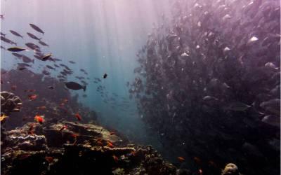 Turbinas eólicas, bancos de peces y Biomímesis