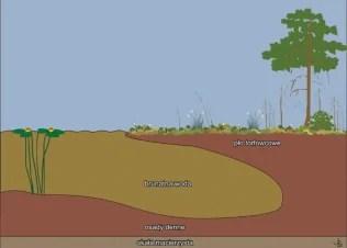 Schemat jeziora dystroficznego