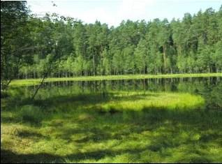 Jezioro dystroficzne na terenie Rezerwatu Zakręt
