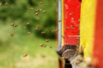 μελισσοκομια