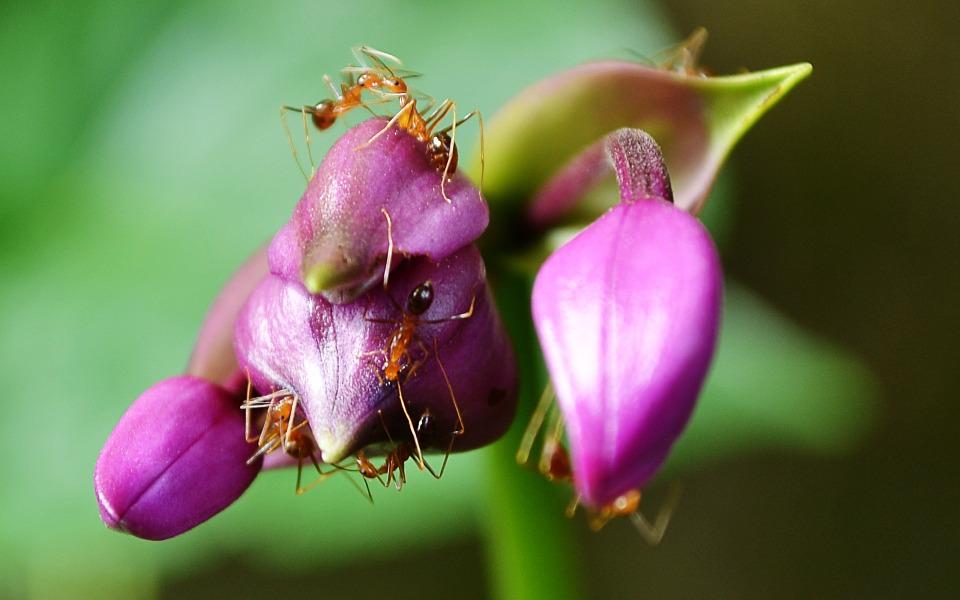 des fourmis sur une fleur
