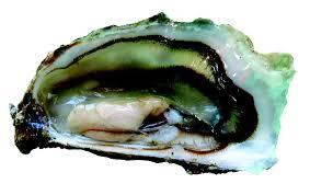 une huître