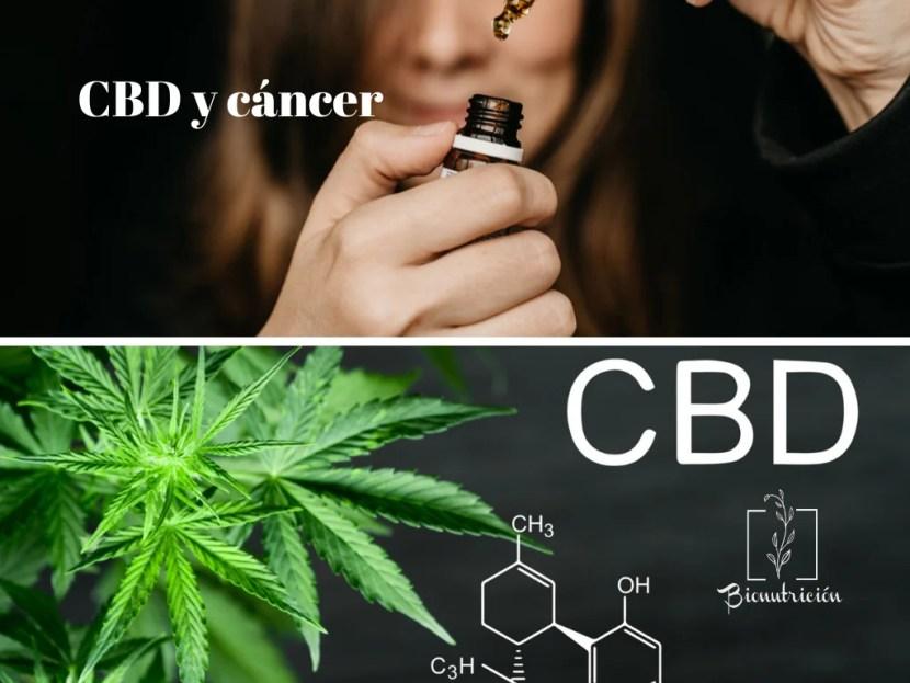 Cómo los cannabinoides ayudan en el cáncer