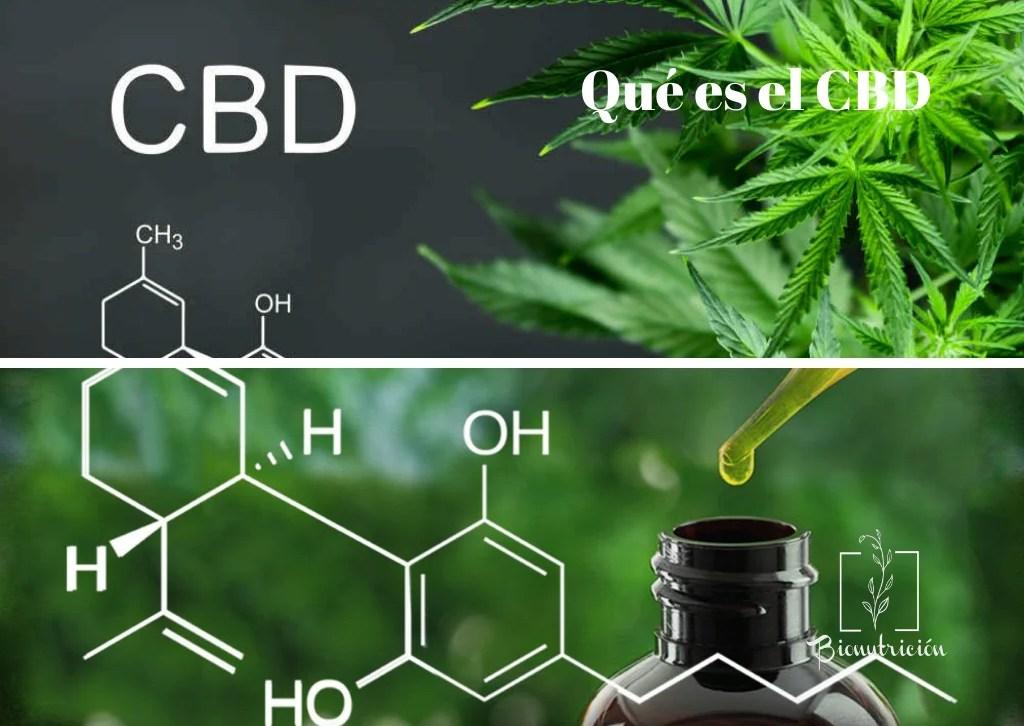CBD y su aplicación en las diferentes patologías