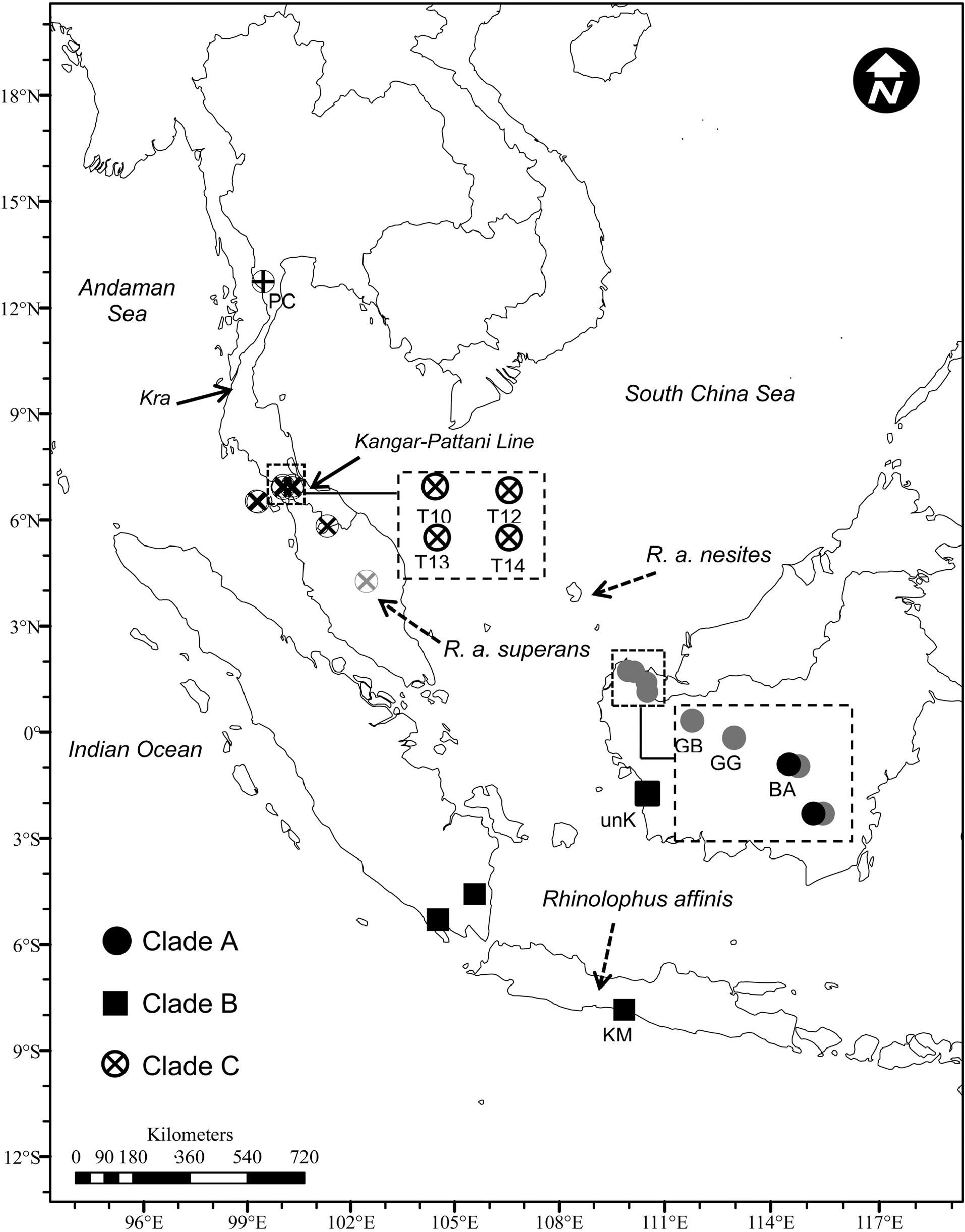 Geographical Variation Of Rhinolophus Affinis Chiroptera