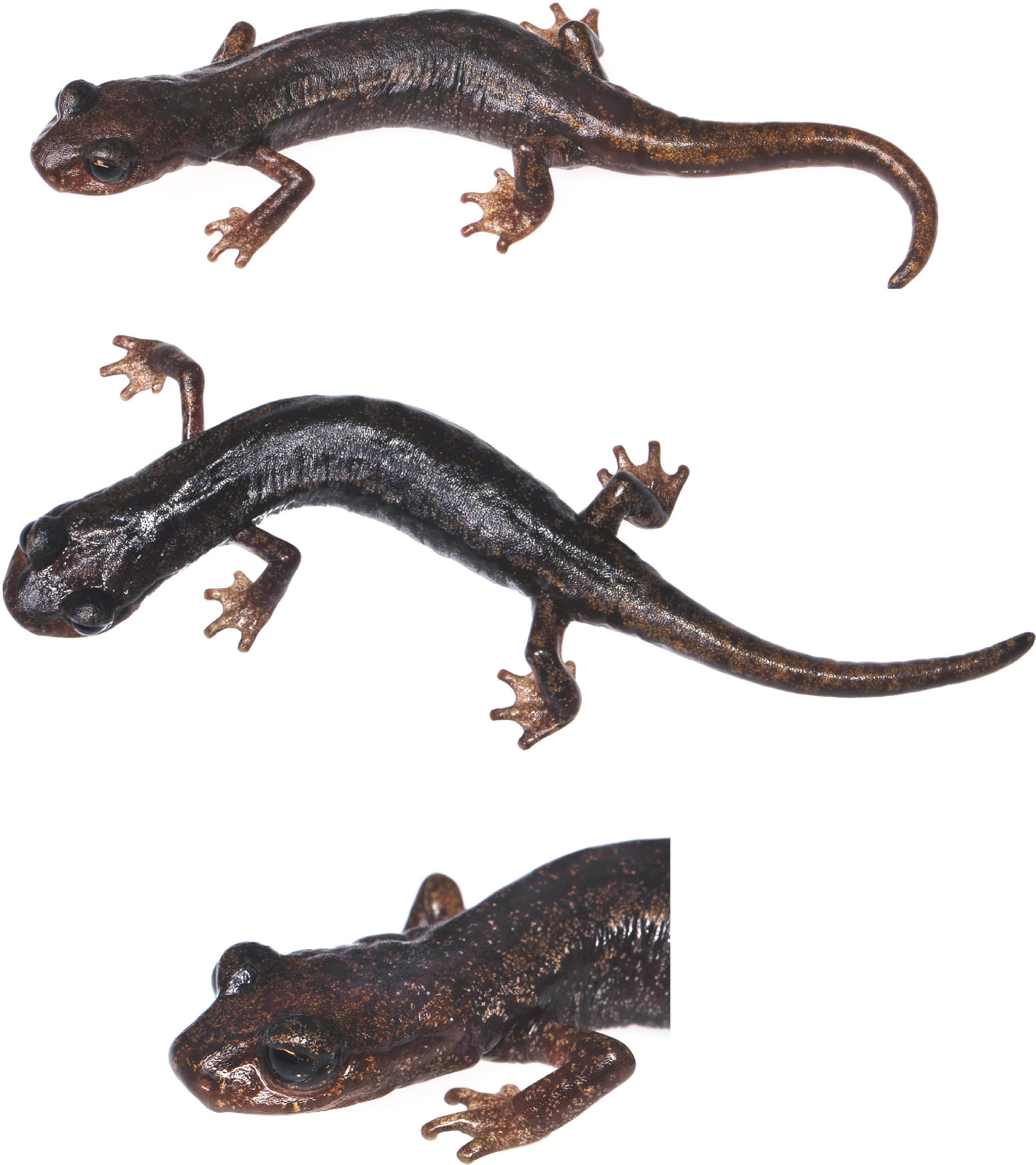 Fresh Salamander Life Cycle Coloring Pages