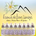 Essences de Fleurs Sauvages des Hautes Alpes