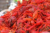 crawfish-169694_1920