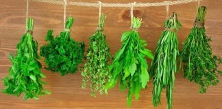 10 Herbs for Optimal Health and Healing