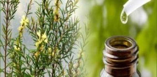 Use Melaleuca Essential Oil for Complete Mind
