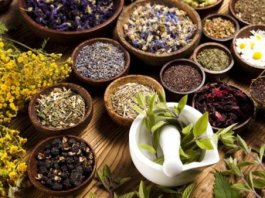 Phytotherapy Complementary medicine in spotlight in 21st century