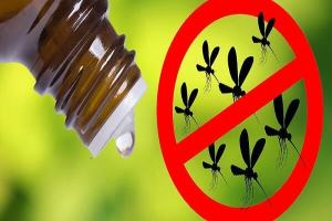 Alternative Essential Oils to Repel Insects