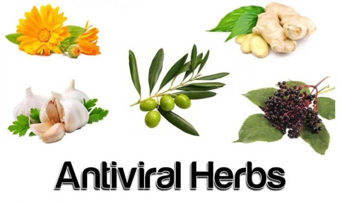 Natural Antiviral Herbs