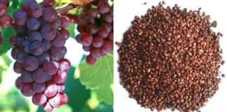 Grape Seeds, it's a Treasure Trove of Benefits