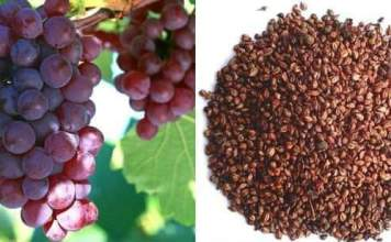 Grape Seeds, it's a Treasure Trove of Benefits
