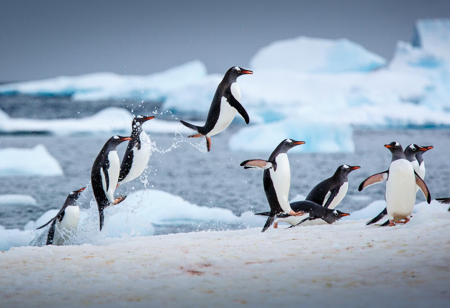 plastics in antarctic