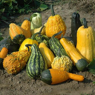 bioplastics from fruit