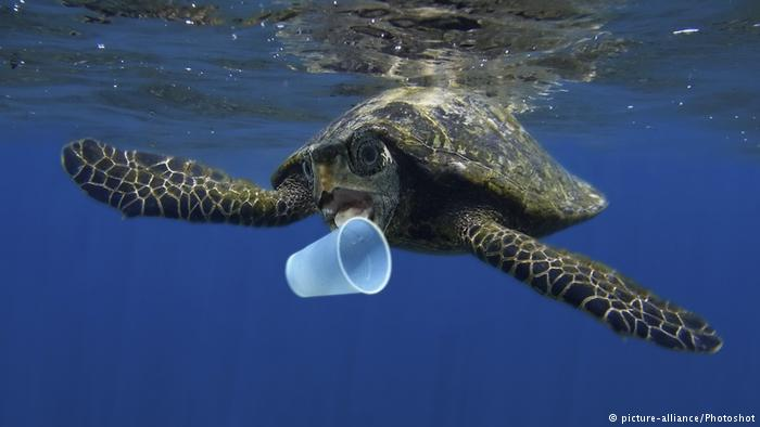 Are Biodegradable Plastics the Answer to Ocean Plastic