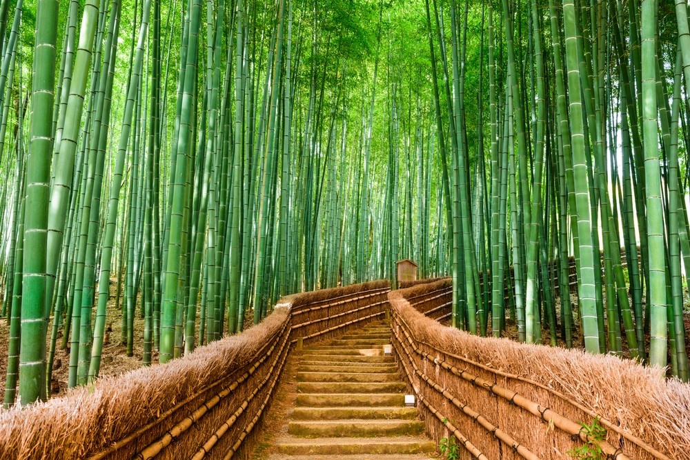 bamboo biocomposites