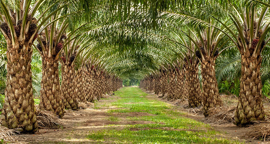 palm oil bioplastics
