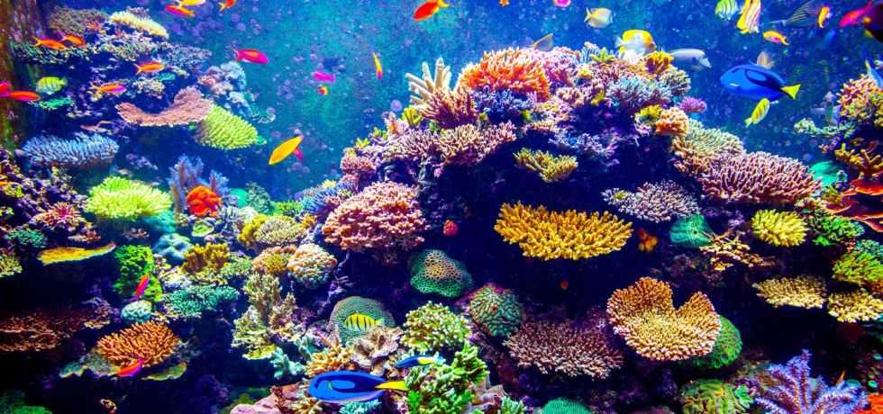 pla coral reef bioplastics