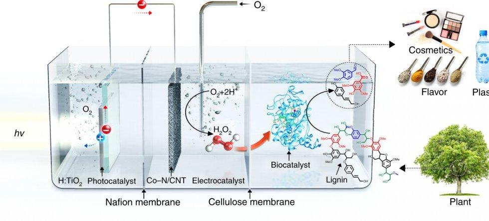 biocatalytic system biochemicals