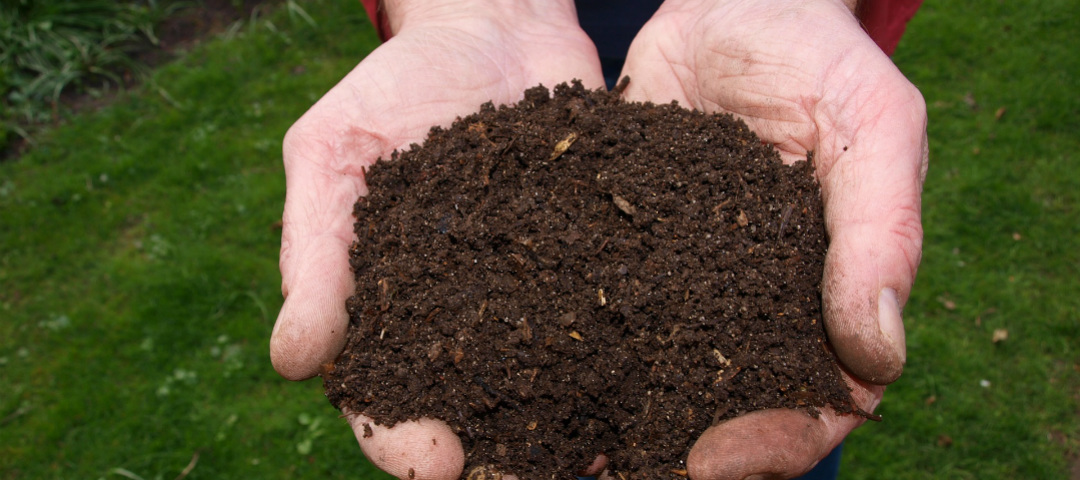 compost and compostable plastic