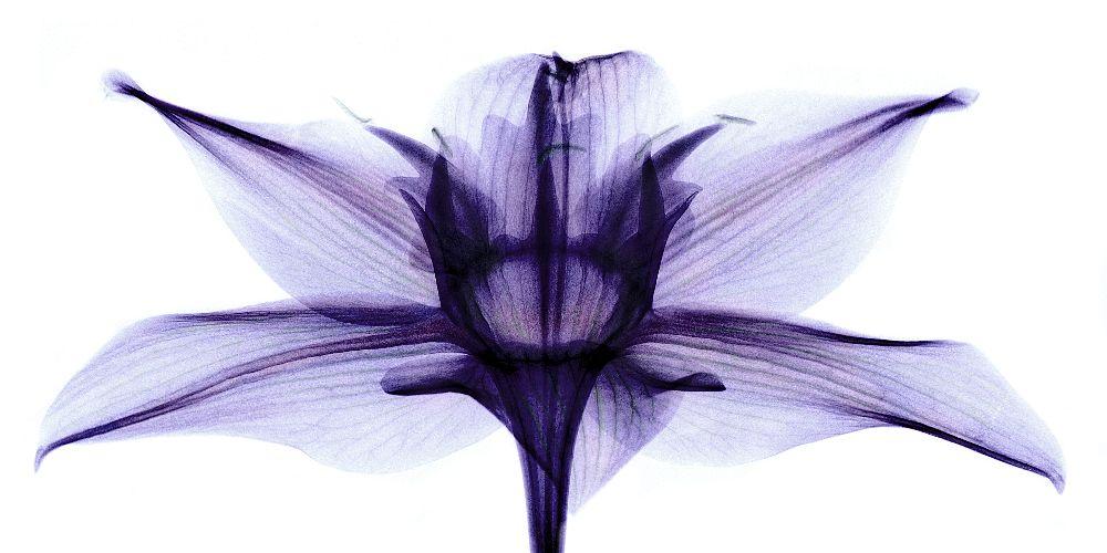 nanoplastic plants
