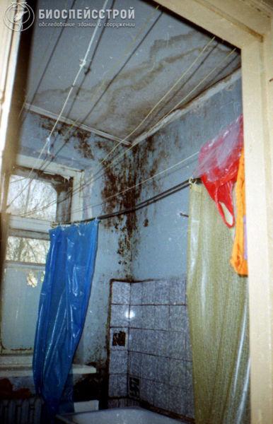 Плесень в душе, бане, сауне, ванной. Как удалить и что делать?