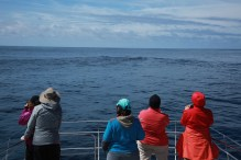 Following sperm whales (taken by Craig Turner)