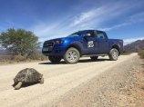 Leopard tortoises prefer Fords ;)