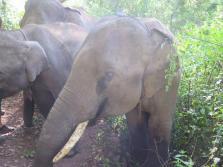 elephants-2016-4