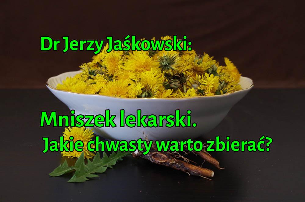 Dr Jerzy Jaśkowski: Mniszek lekarski - Jakie chwasty warto zbierać?