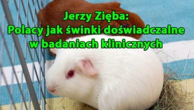 Jerzy Zięba: Polacy jak świnki doświadczalne w badaniach klinicznych leków
