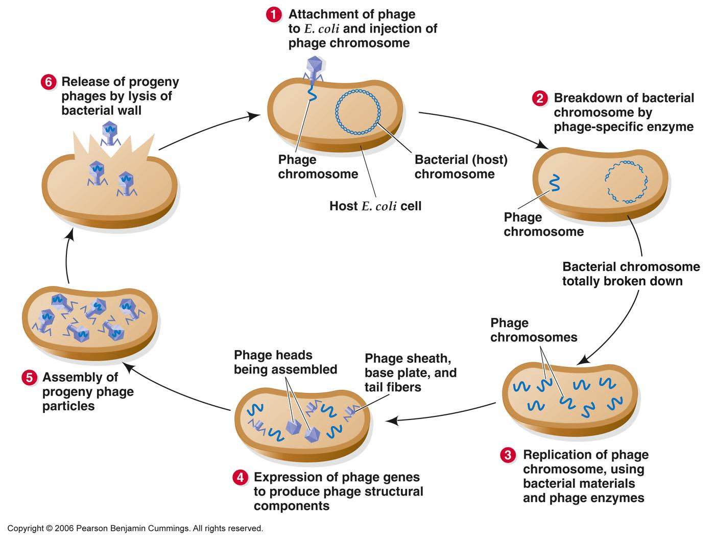 Virology Page 2 Biotech Khan