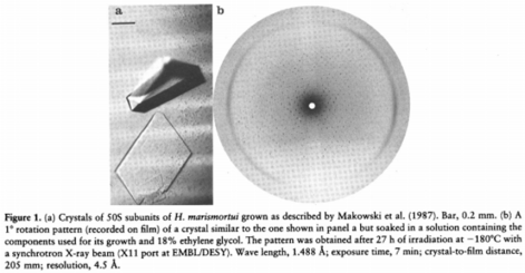 Cristales de la subunidad 50S de H.marismortui / Crystals of the 50S subunit of H.marismortui. Source: Crystallography and Image Reconstructions of Ribosomes. A. Yonath et al., 1990.